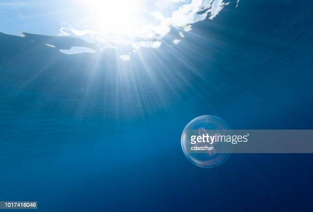 jellyfish - cdascher stock pictures, royalty-free photos & images