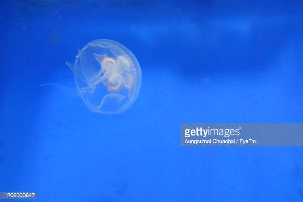 jellyfish swimming in the water. animal and nature concept. - aungsumol stock pictures, royalty-free photos & images