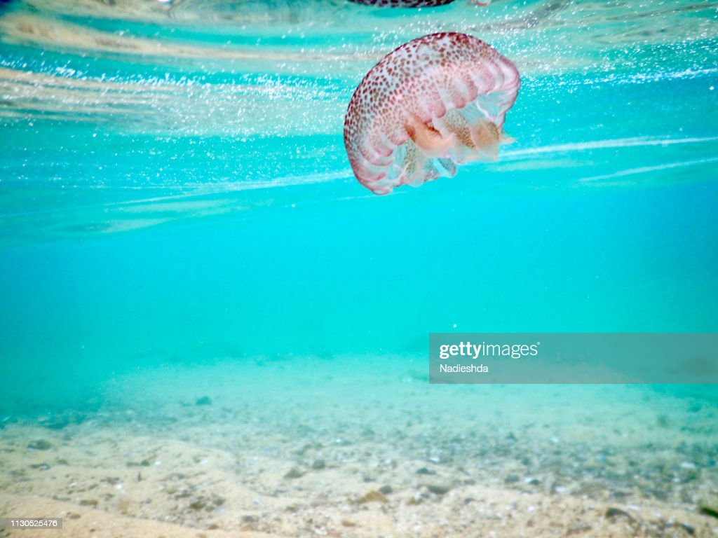 Jellyfish underwater : Stock Photo