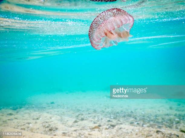 jellyfish underwater - lanzarse al agua stock pictures, royalty-free photos & images