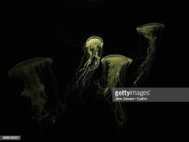 jellyfishes swimming in sea - jens siewert stock-fotos und bilder
