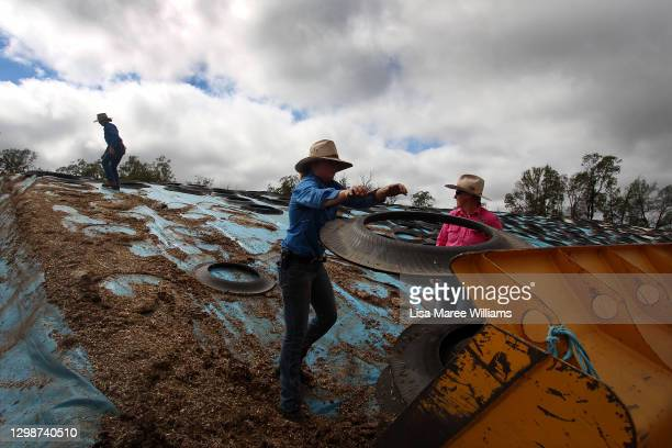 Jemima, Karen and Molly Penfold prepare to pull back tarp covering silage for cattle feed at 'Mamaree' on January 19, 2021 in Meandarra, Australia....