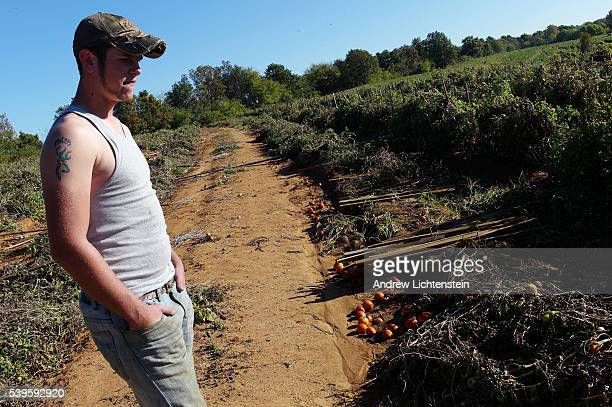 Jenkin's farm foreman Matt Nelson looks over tomatoes rotting on the ground On the Jenkins farm on Chandler Mountain about 50 miles north of...