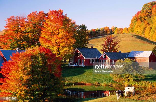 Jenne's Farm with trees in autumn colours.