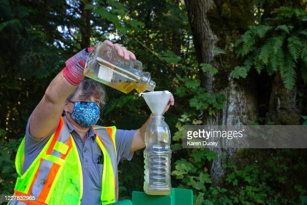Jenni Cena, pest biologist and trapping supervisor from the Washington State Department of Agriculture , pours the waste from a trap designed to...
