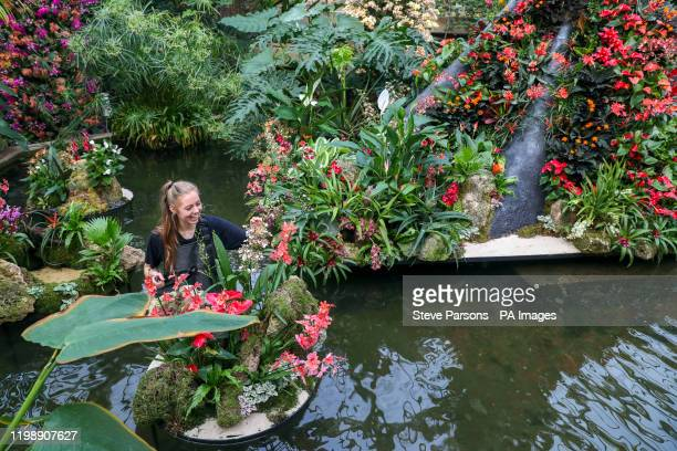 Jenny Crabb puts the finishing touches to some of the 5000 colourful orchids and hundreds of other tropical plants in the Indonesiathemed Orchid...