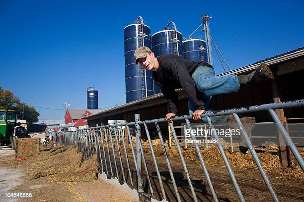 Jerad Herther a relative of the Rodens works with the calves at the RobNCin farm on September 29 2010 in West Bend Wisconsin The farm has roughly 400...