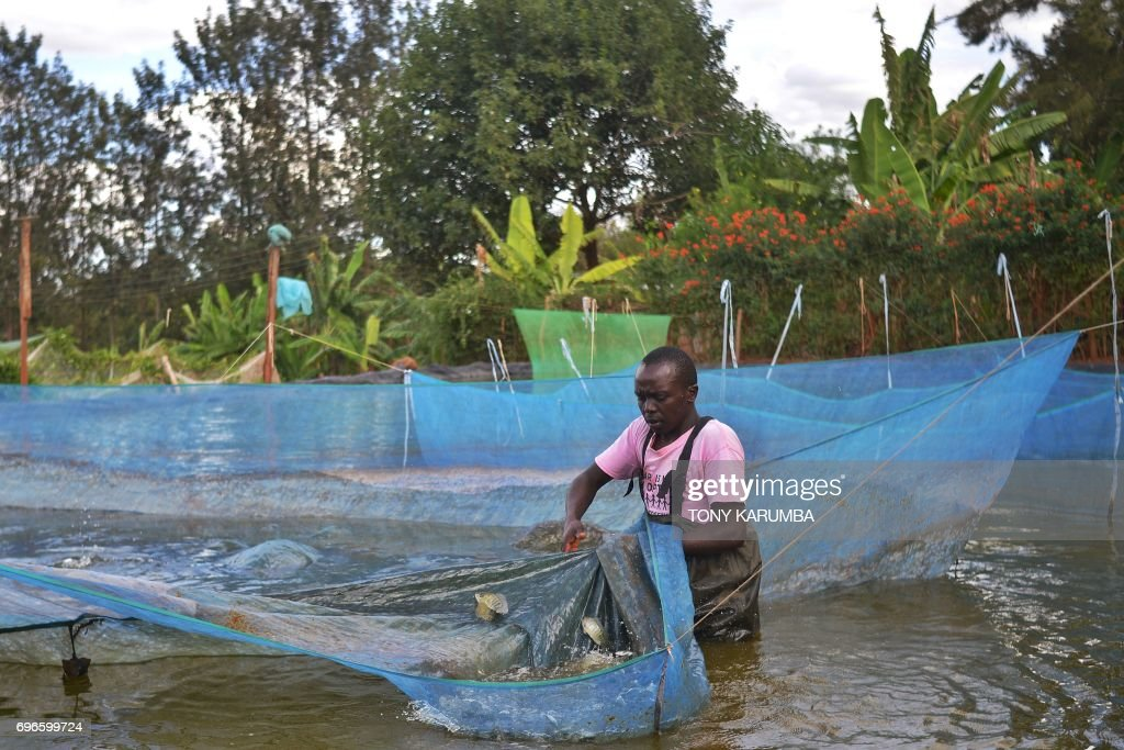 FISH FARM : News Photo