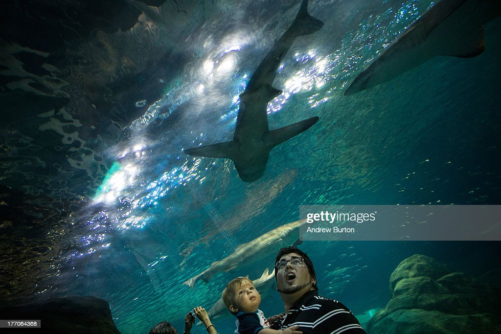 Jeremy Prader and his son, Logan Prader, watch as sharks swim overhead while standing inside an underwater tunnel shark exhibit at Adventure Aquarium on August 20, 2013 in Camden, New Jersey. The town of Camden, which was once a large industrial town but watched it's population dwindle as manufacturing left, has been marred with societal problems including high unemployment, crime, murder and heavy drug for decades. The aquarium, on the shores of the Delaware river and across from Philadelphia, PA, is a bright spot for the community and draws tourists from around the region. Animals on display include sharks, hippos, penguins, sea turtles, a giant Pacific octopus and an alligator.