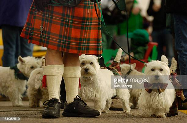 Jerry VanDyke marched in the St Patrick's Day parade with his West Highland White Terriers Gregor and Mollie Saturday They followed the City of...