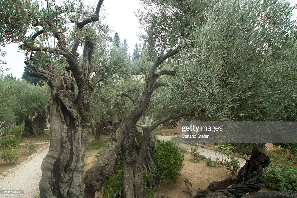 Jerusalem, Garden Of Gethsemane