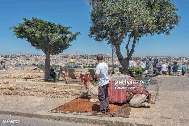 jerusalem - mount of olives stock photos and pictures