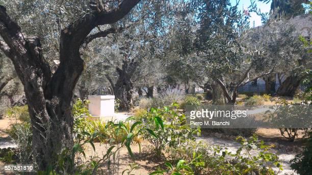 jerusalem - garden of gethsemane stock pictures, royalty-free photos & images
