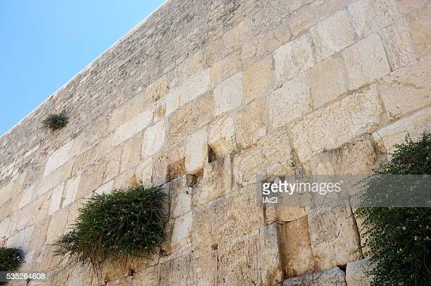 jerusalem, the white dove nested in the western wall - wailing wall stock pictures, royalty-free photos & images