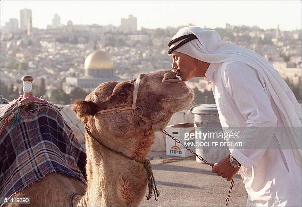 An elderly East Jerusalem Palestinian citizen kisses 29 January 1996 his only source of income a camel at the Mount of Olives in Jerusalem where...