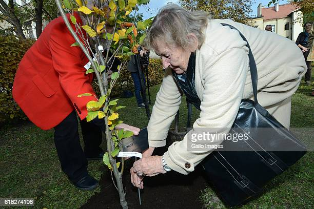 Jerzy Illg and Urszula Koziol attend the ceremony of planting Wislawa Szymborskaâs acacia on October 24 2016 near Dworek Lowczego in Krakow Poland...