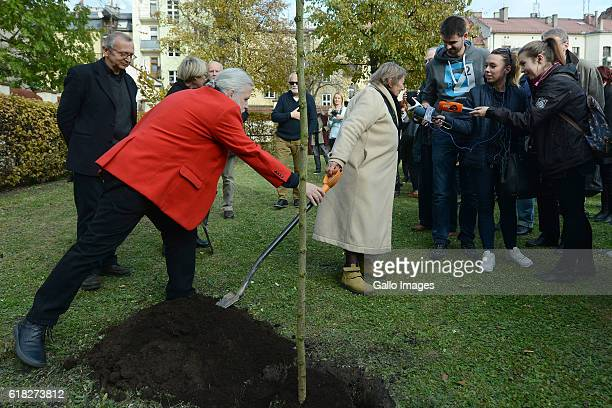 Jerzy Illg Urszula Koziol and other guests attend the ceremony of planting Wislawa Szymborskaâs acacia on October 24 2016 near Dworek Lowczego in...