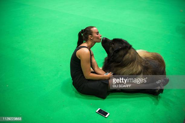 Jesika Junehall from Sweden rests with her leonberger dog in a vacant show ring on the second day of the Crufts dog show at the National Exhibition...