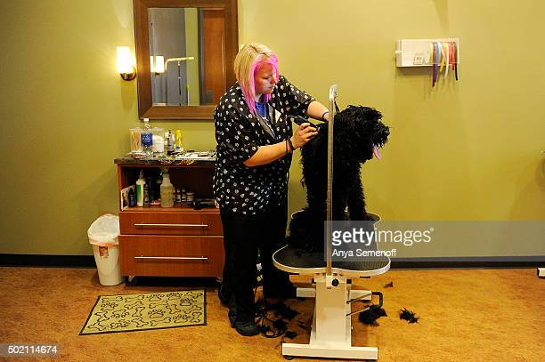 Jessica McClure grooms Kona the dog at Loving Family Animal Hospital on December 11 in Aurora Colorado Loving Family Animal Hospital incorporates a...