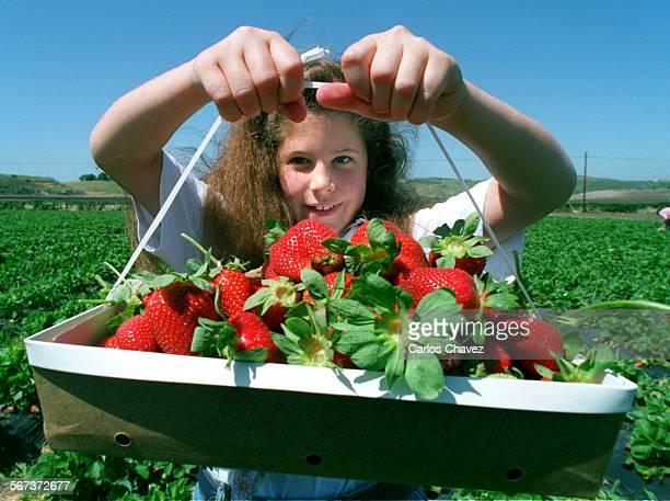 Jessica Patton shows off her moring effert of picking strawberries in Moorpark The ranch grows both Chandler and Camrosa berries