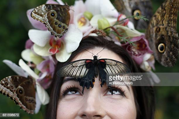 Jessie May Smart wearing a floral crown made of tropical flowers poses for a photograph with a Great Yellow Mormon butterfly perched on her forehead...
