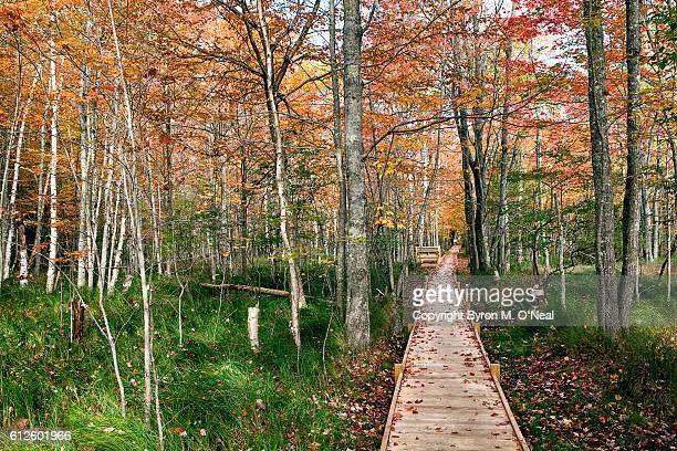 Jesup Trail