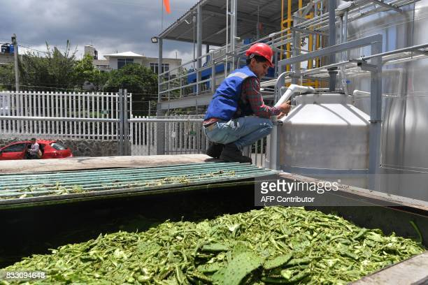 Jesus Zumaya operator of the organic waste processing plant explains the process of nopal waste inside the biodigestor in Milpa Alta borough Mexico...
