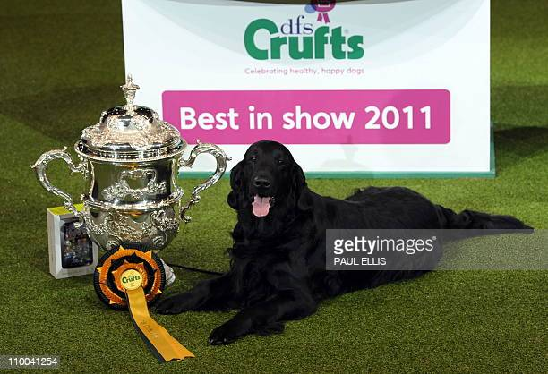 Jet a Flatcoated Retriever and breeder Jim Irvine from South Queensferry Scotland is awarded 'Best in Show' after earlier winning the Best Gundog...