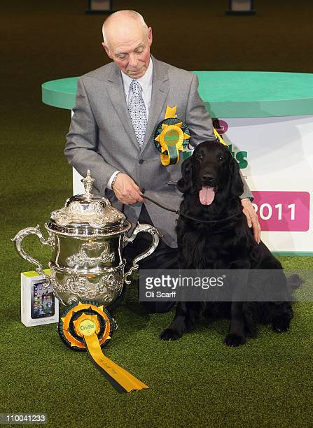 Jet a Flatcoated Retriever dog and handler Jim Irvine celebrate after winning 'Best in Show' at the 2011 Crufts dog show at the National Exhibition...