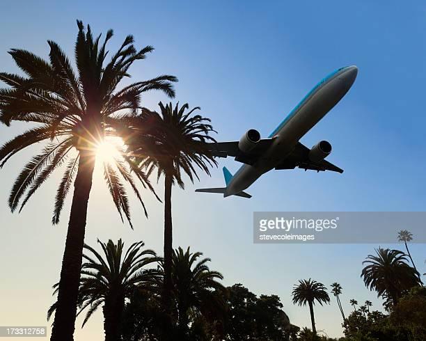 Jet de palmiers