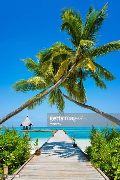 jetty at canareef resort maldives, herathera island, addu atoll, maldives - maldivas imagens e fotografias de stock