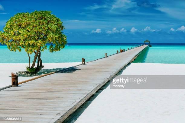 jetty at dhiffushi holiday island, south ari atoll, maldives - isole maldive foto e immagini stock