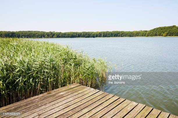 jetty at idyllic lake with reed grass against blue sky in summer - küste stock-fotos und bilder