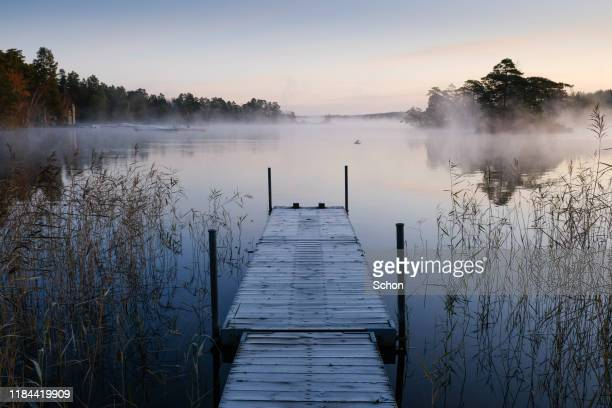 a jetty on a still lake with reed and morning fog one autumn morning - jetty stock pictures, royalty-free photos & images