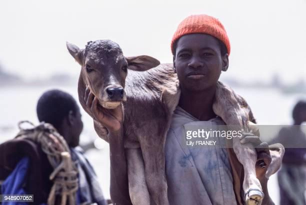Jeune gardien de troupeau portant un veau sur les épaules à Sofara en décembre 1987