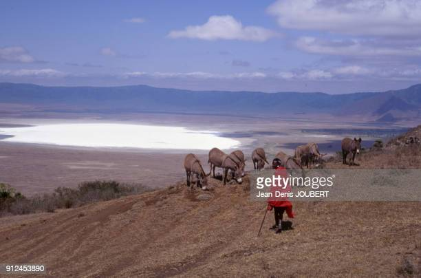 Jeune Massai gardant ses anes pres du lac Natron en 1993 dans la vallee du grand rift Tanzanie