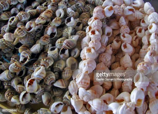 jewelry & decorative stuff made from seashells - limpet stock pictures, royalty-free photos & images