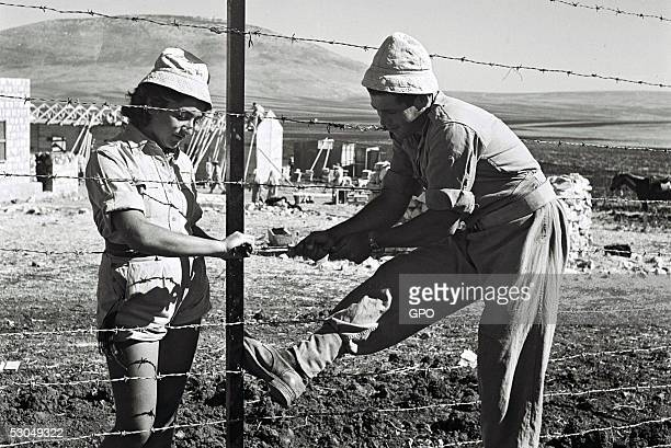 Jewish pioneering settlers erect barbed wire fencing around the newlyestablished cooperative farming community October 31 1946 of Kibbutz Dovrat...