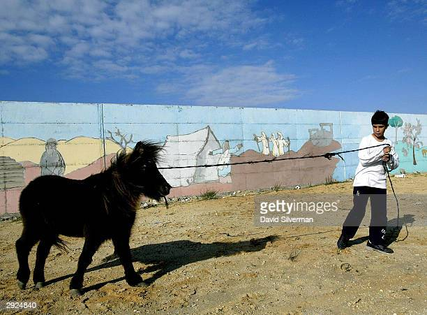 Jewish settler youth Dror Atiya plays with his pony in front of a security wall decorated with biblical scenes February 3 2004 in Morag settlement in...