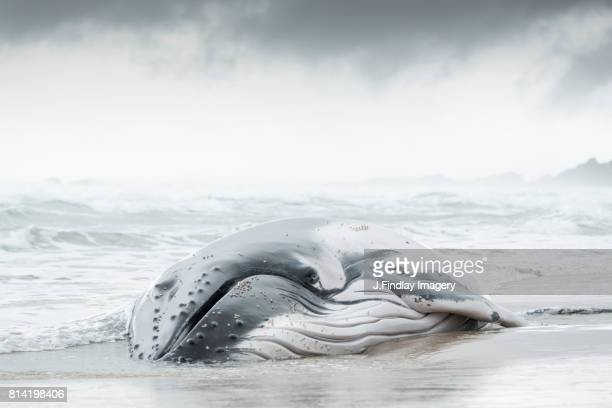 jf17_sw6.jpg - cetacea stock photos and pictures