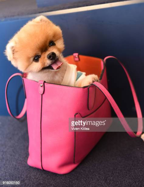 Jiff the Pomeranian attends Mashup LA Influencer Event on February 8 2018 in Playa Vista California Photo by Vivien Killilea/Getty Images for MASHUP...