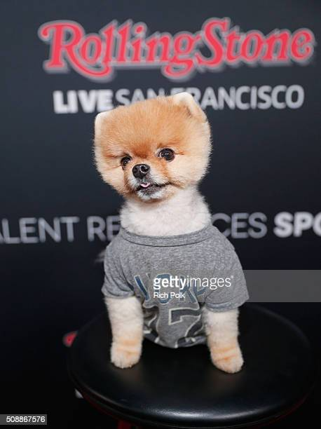 Jiff The Pomeranian attends Rolling Stone Live SF with Talent Resources on February 6 2016 in San Francisco California