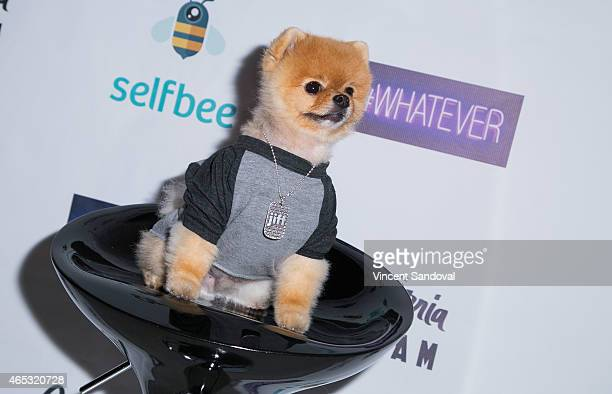 Jiff The Dog Pictures and Photos - Getty Images