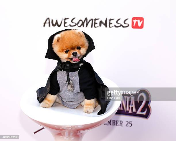 """Jiff The Pomeranian attends the """"Hotel Transylvania 2"""" Special Screening Hosted By Awesomeness TV & Fifth Harmony at Sony Pictures Studios on..."""