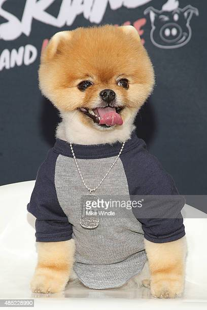 Jiff The Pomeranian attends the premiere of Awesomeness TV's Janoskians Untold and Untrue at Regency Bruin Theatre on August 25 2015 in Los Angeles...