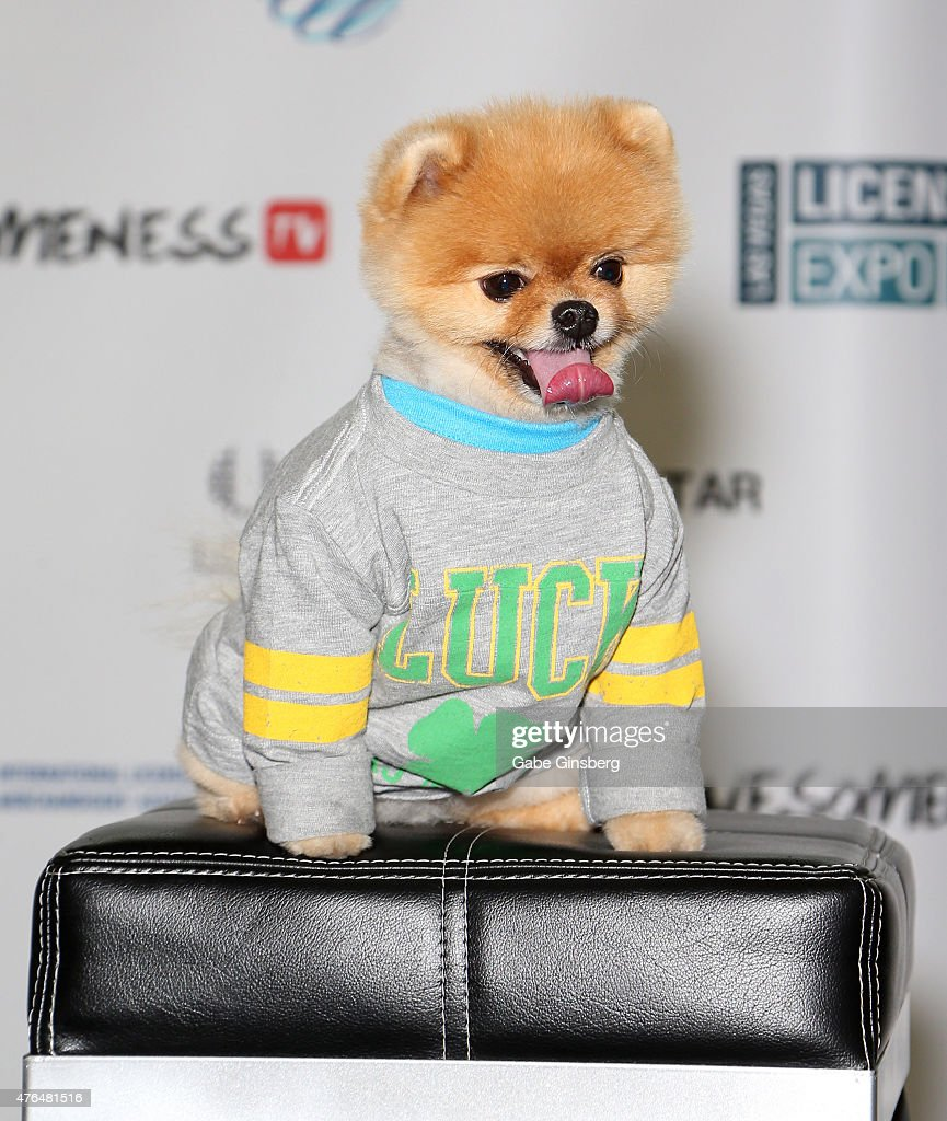 Jiff, the world's fastest dog on two paws, attends the Licensing Expo 2015 at the Mandalay Bay Convention Center on June 9, 2015 in Las Vegas, Nevada.