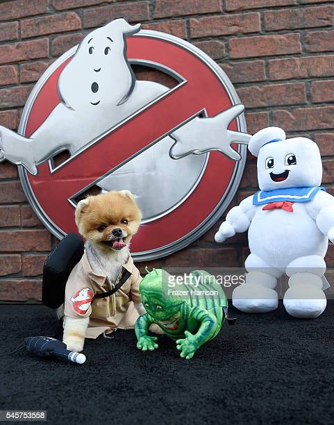 Jiffpom arrives at the Premiere of Sony Pictures' Ghostbusters at TCL Chinese Theatre on July 9 2016 in Hollywood California