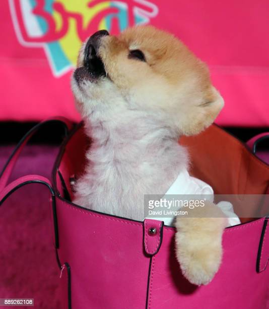 Jiffpom attends social media influencer Annie LeBlanc's 13th birthday party at Calamigos Beach Club on December 9 2017 in Malibu California