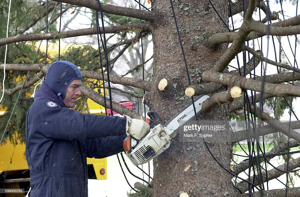 Jim Brumfield buzzes through the lower branches of the Capitol Christmas Tree during snow flurries Thursday morning.