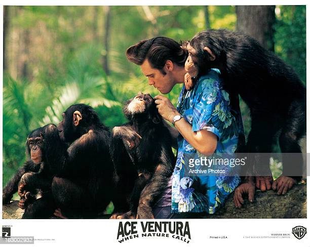 Jim Carrey with chimpanzees in a scene from the film 'Ace Ventura When Nature Calls' 1995